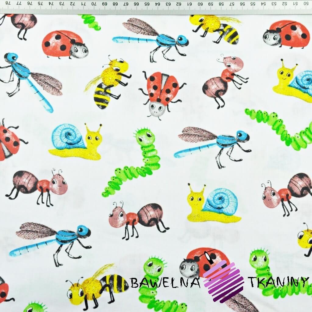 owady i ślimaki kolorowe na białym tle