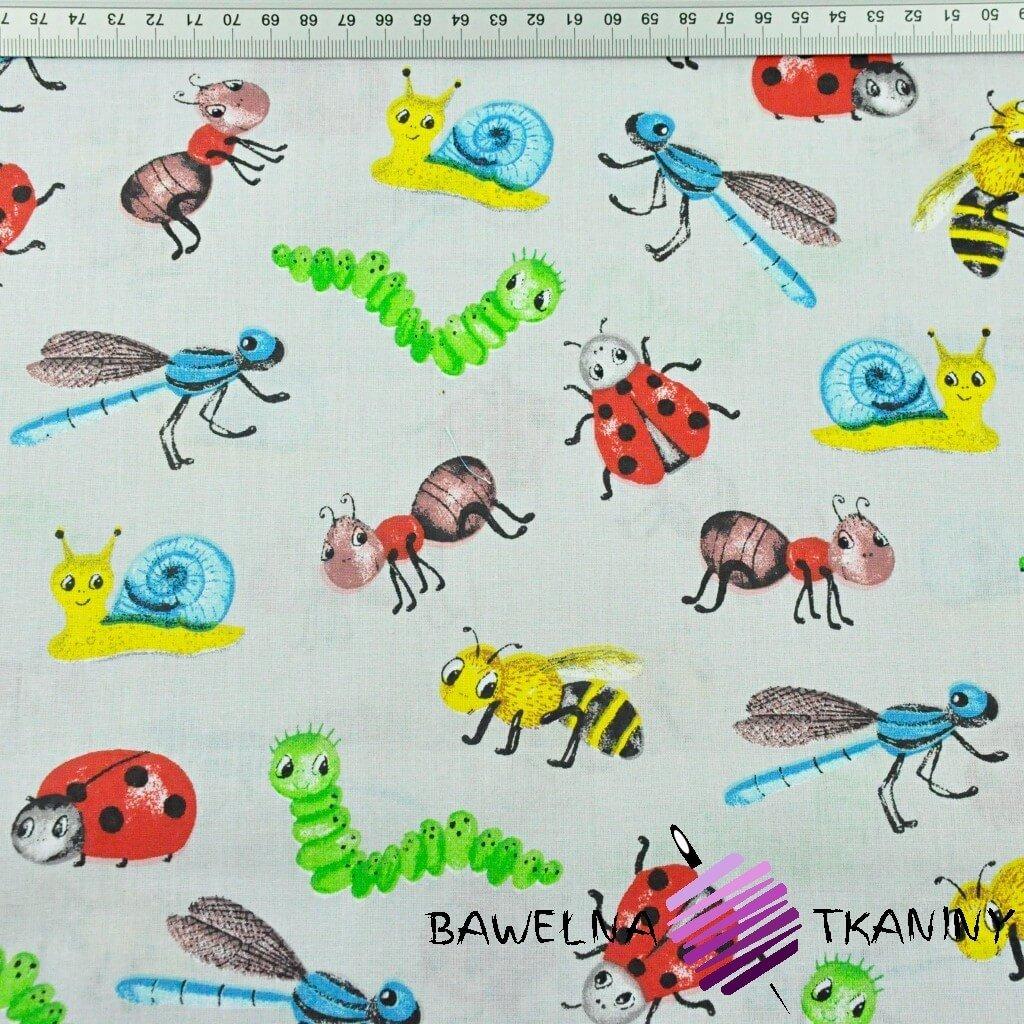 owady i ślimaki kolorowe na szarym tle