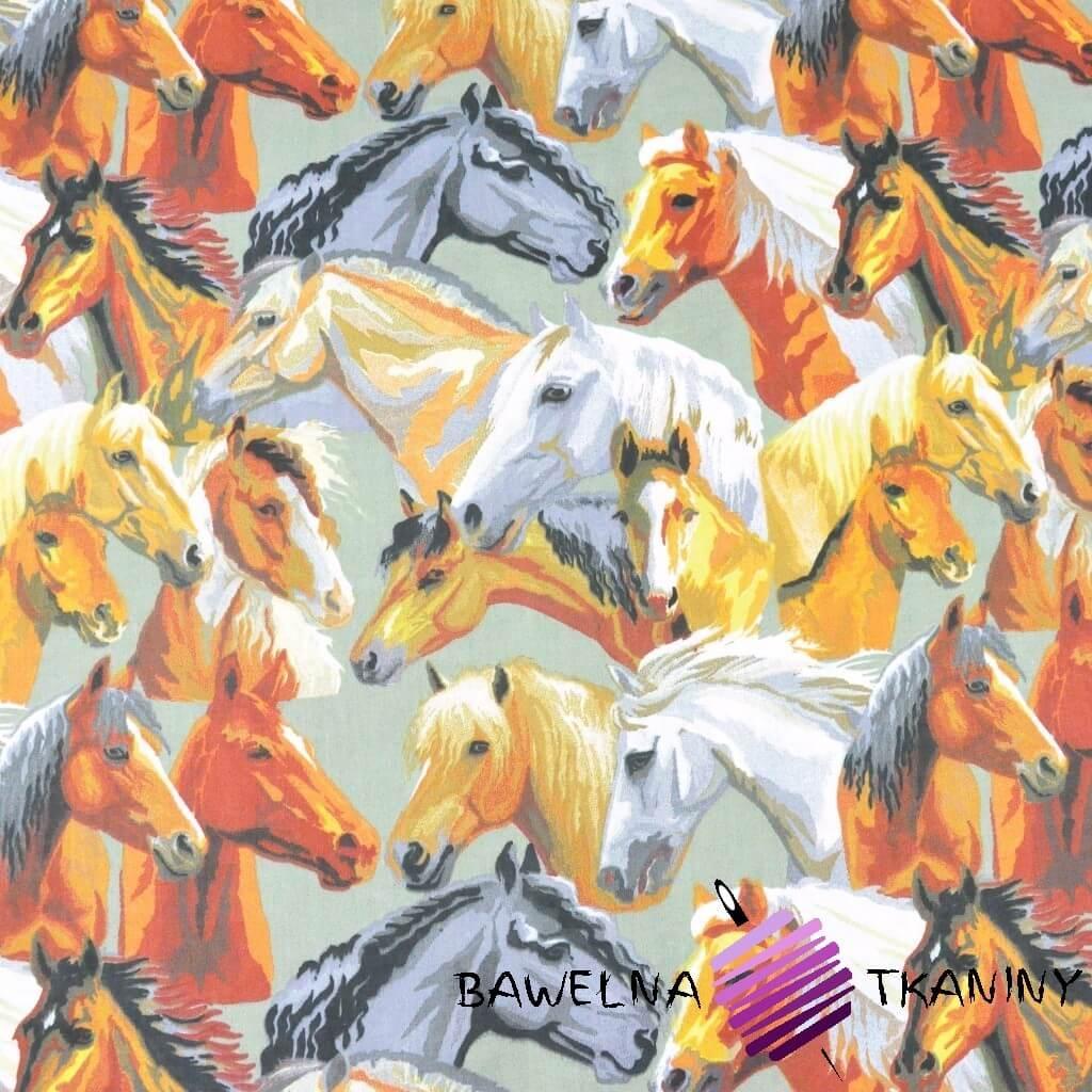 konie brązowo szare na szarym tle