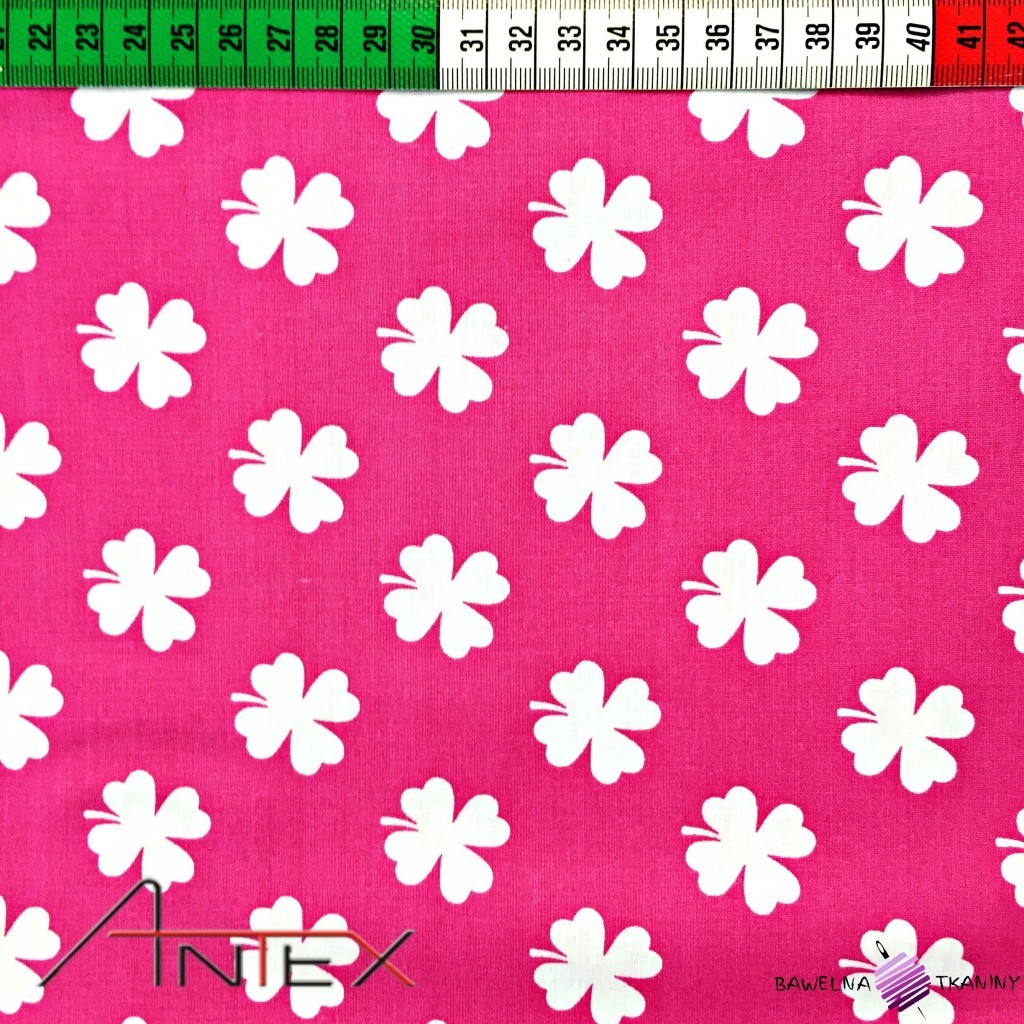 Cotton white clover on pink background