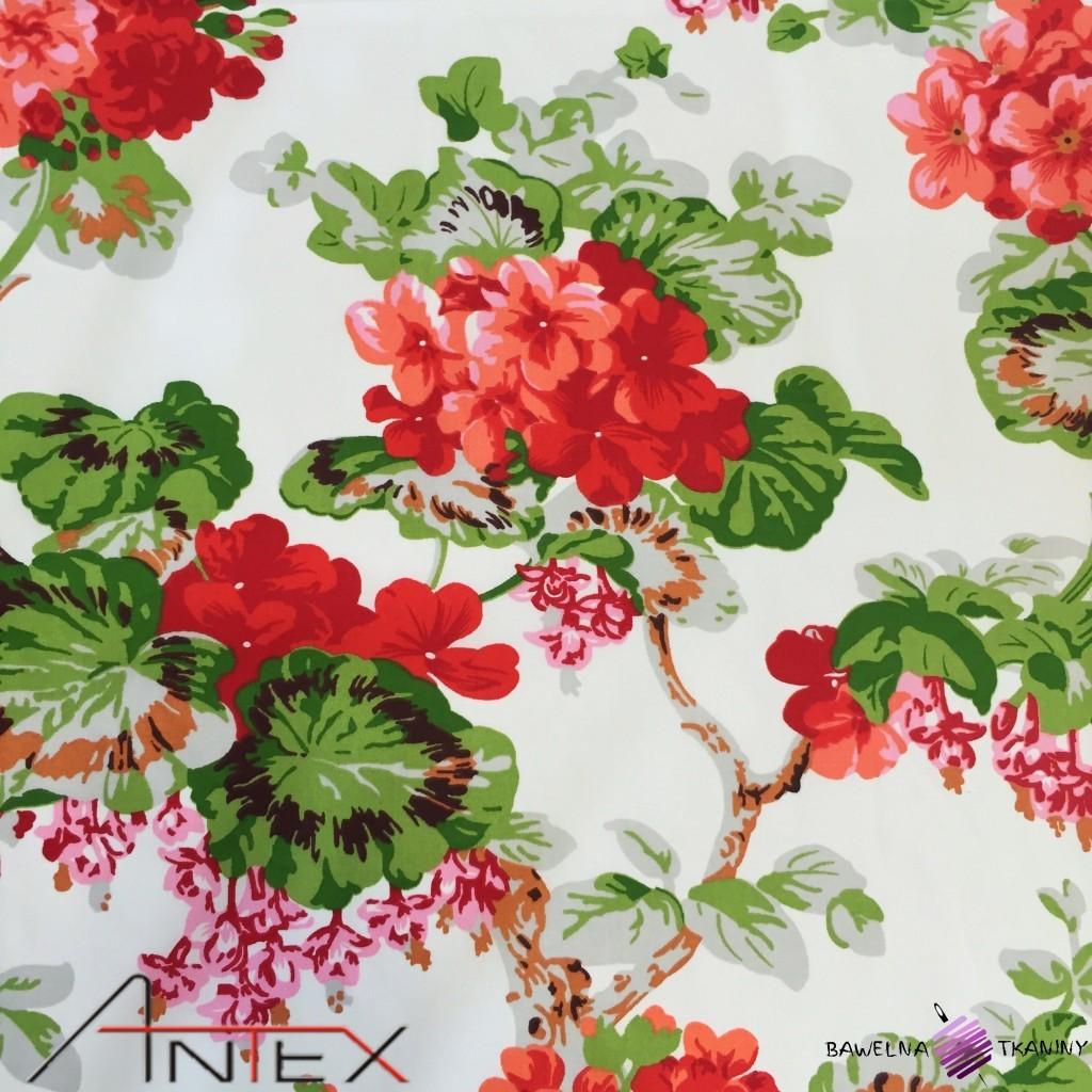Bawełna kwiaty pelargonie czerwone na białym tle