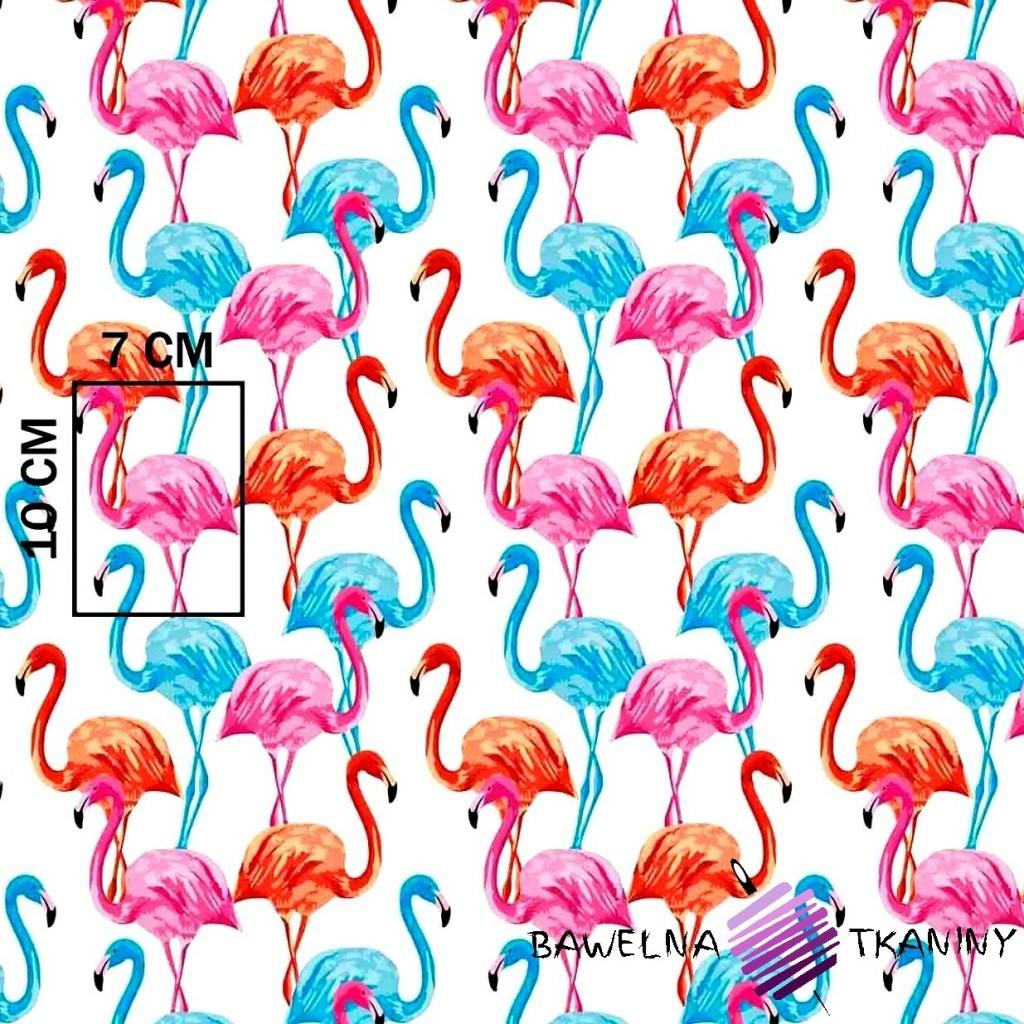 Bawełna flamingi niebiesko-czerwono-różowe na białym tle