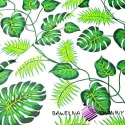 Bawełna liście zielone na białym tle