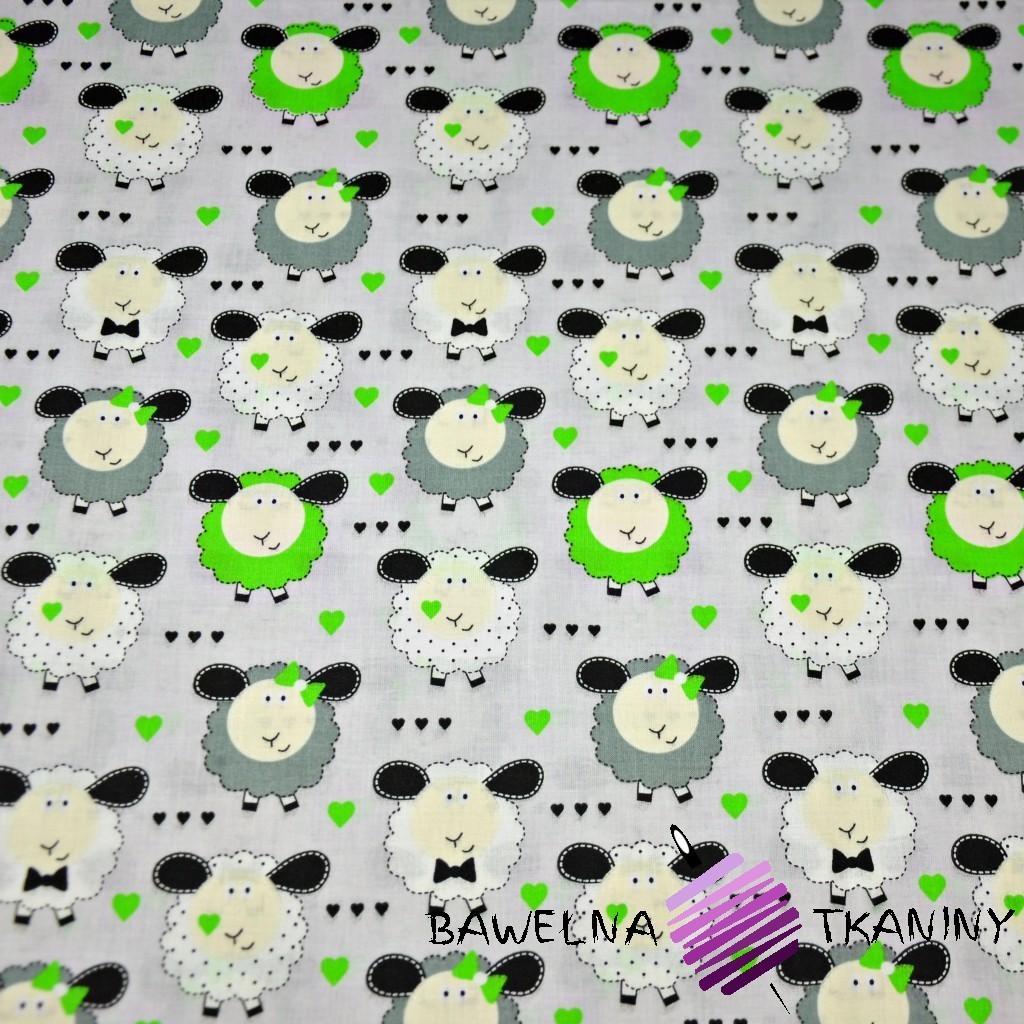 Bawełna owieczki zielono białe na szarym tle