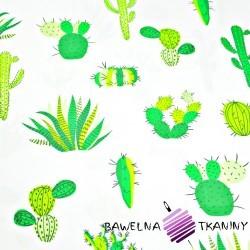 Bawełna kaktusy zielone na białym tle