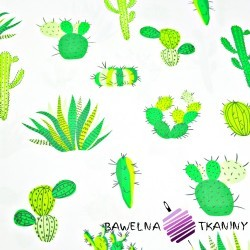 Cotton green cactuses on a white background