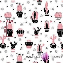 Cotton pink-black cactuses on a white background