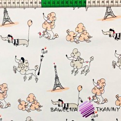 Bawełna Paryż morelowy na białym tle