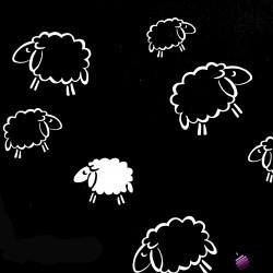 Bawełna białe owieczki na czarnym tle