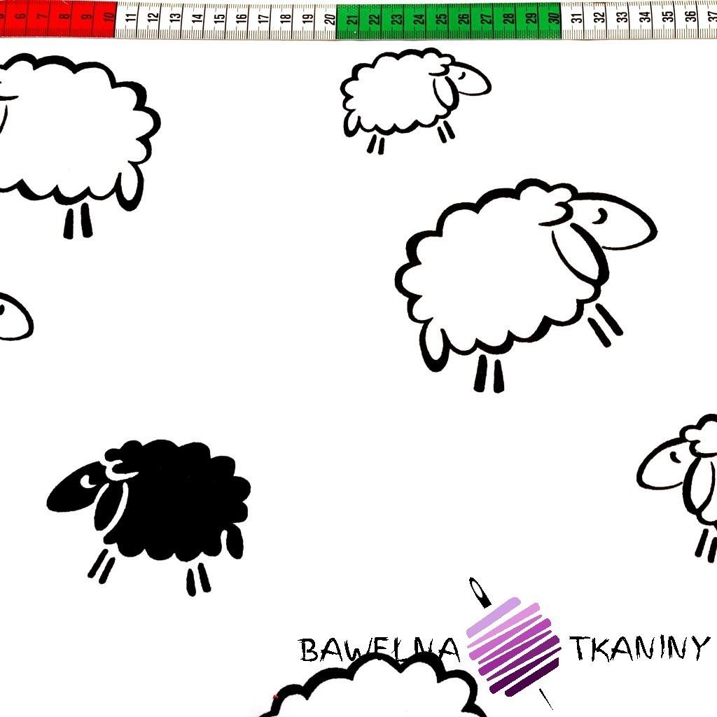 Bawełna czarne Owieczki na białym tle