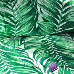Cotton green palm leaves on a white background