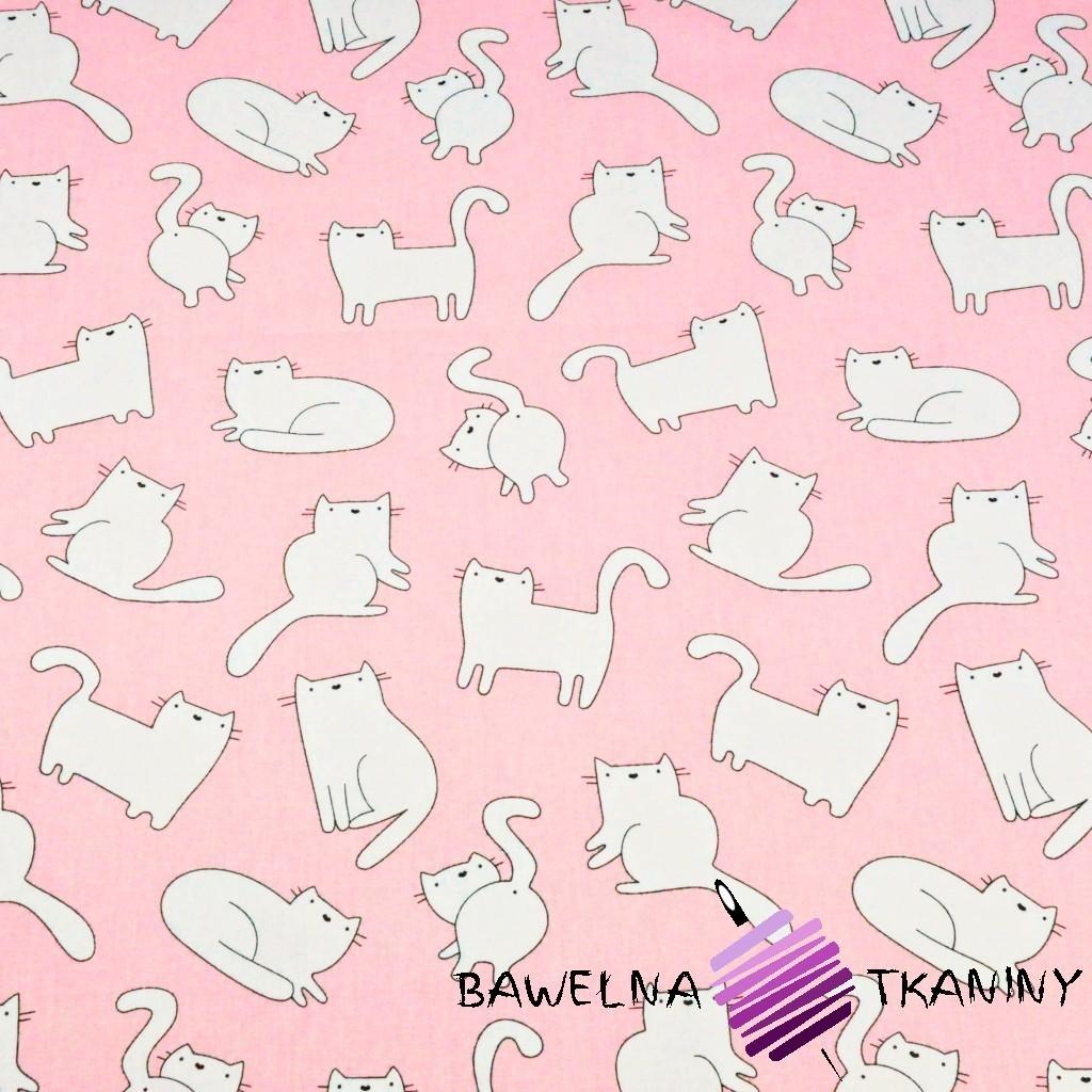 Bawełna kotki białe na różowym tle