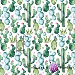 Cotton mexican green cactus on white background