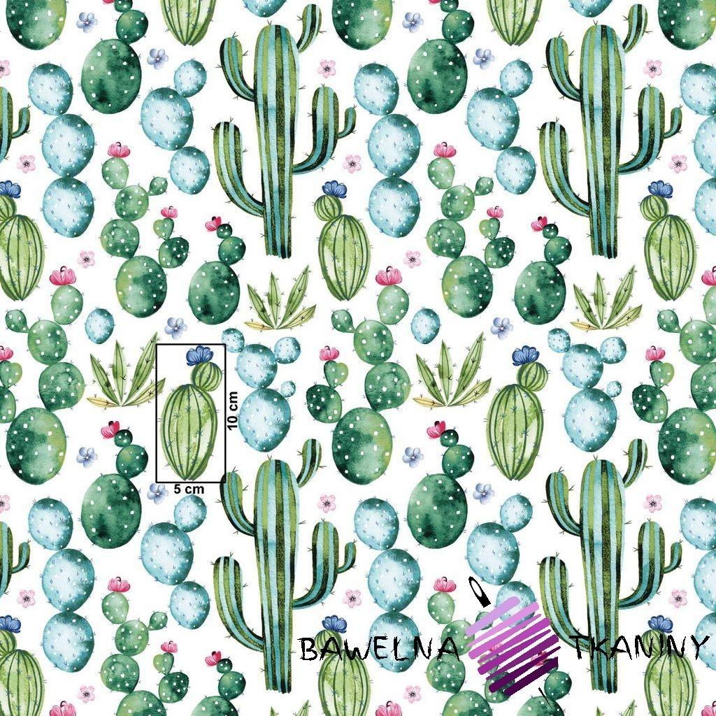Bawełna kaktusy meksykańskie zielone na białym tle