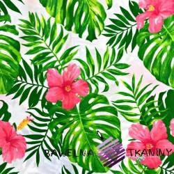 Bawełna hibiskus różowy z zielonymi liśćmi na białym tle