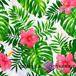 Cotton pink hibiscus with green leaves on a white background