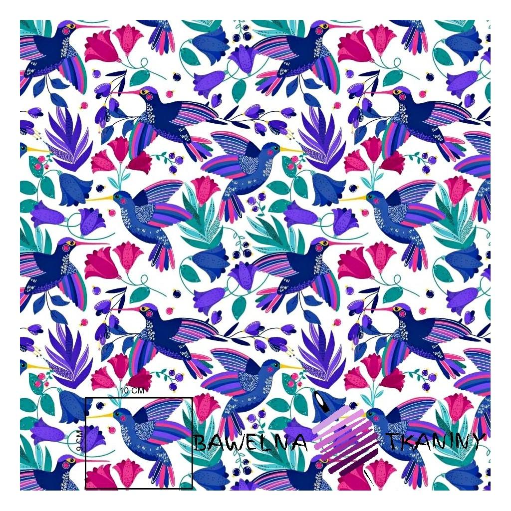Bawełna kolibry szafirowo różowe na białym tle