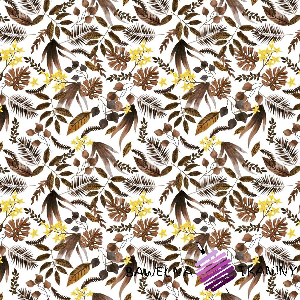Bawełna zagajnik brązowy na białym tle