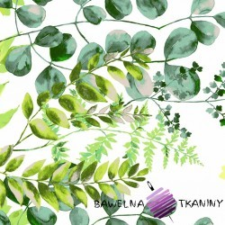 Bawełna liście eukaliptusa zielone na szarym