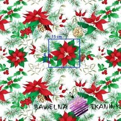 Bawełna wzór świąteczny gwiazda betlejemska czerwono zielona na białym tle