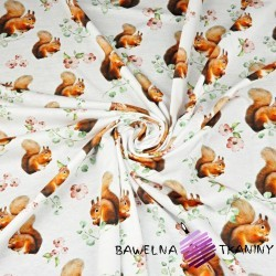 Cotton Jersey digital print - squirrels on white background