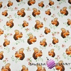 Dzianina Jersey druk cyfrowy - wiewiórki na białym tle