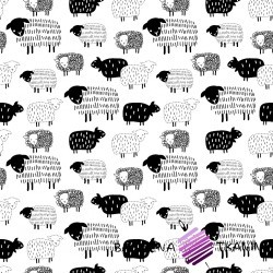 Bawełna owieczki rysowane czarne na białym tle