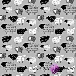 Cotton covered black sheep on a gray background