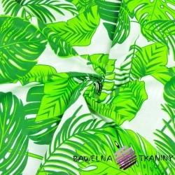 liście duże zielone na białym tle