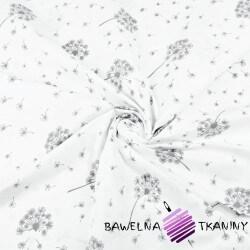 Cotton gray dandelion on white background
