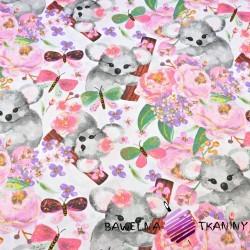 misie koala z motylkami na białym tle