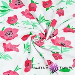 kwiaty maki czerwone na białym tle