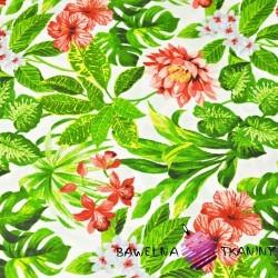 Kwiaty skrętniki czerwono białe z zielonymi liśćmi na białym tle