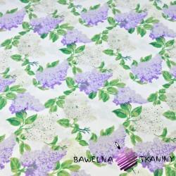 Kwiaty bzu biało fioletowe na białym tle